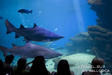 Достопримечательности Майорки. Palma Aquarium.