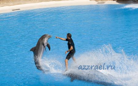 Дельфины в Лоро Парк Тенерифе