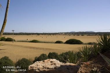 Вид из парка кактусов Botanica